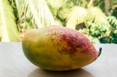 mango, exotic fruit on the plm background royalty free stock photo