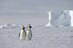 Noël antarctique Images stock
