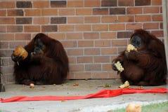 Noël au zoo photo stock