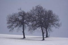 Noël blanc Photographie stock libre de droits