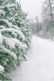 Noël couvert de neige de forêt de pin Photographie stock libre de droits