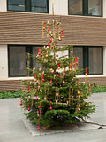 Noël a décoré l'arbre Photos libres de droits