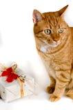 Noël de chat Photo stock