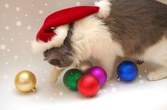 Noël de chat Photos libres de droits