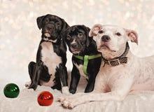 Noël de chien images libres de droits