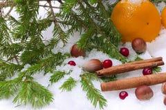 Noël de sapin d'hiver de cannelle de noisette de neige de mandarines Photographie stock libre de droits