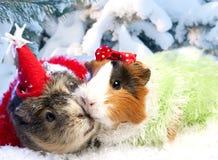 Noël drôle Images libres de droits