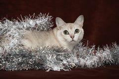 Noël gentil Burmilla devant des cadeaux Images stock