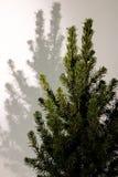 Noël ma version de vecteur d'arbre de portefeuille Branches d'arbre de sapin macro Sapin bleu canadien Photographie stock libre de droits
