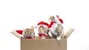 Noël Santa Cat clips vidéos
