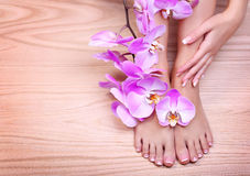 Nożna opieka. Pedicure z różową orchideą kwitnie na drewnianym obrazy royalty free