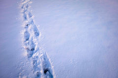 Nożny druk na śniegu Obrazy Royalty Free
