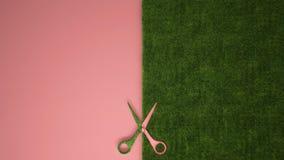 Nożyce ciie zielonej trawy na pastelowych menchiach barwili tło z kopii przestrzenią, ekologia szablonu mockup pojęcie zdjęcia stock