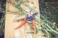 Nożyce i rośliny fotografia stock