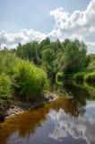 No banco de rio coberto de vegetação sob as nuvens brancas Imagem de Stock