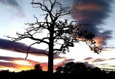 No céu do por do sol Fotos de Stock