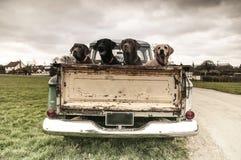 No caminhão Imagem de Stock Royalty Free