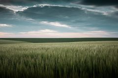 No campo aberto, o trigo cresce, sobre a terra lá é uma nuvem Fotos de Stock