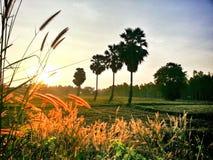 No campo do arroz Fotos de Stock