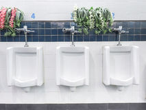 No clean white ceramic urinals for men with flower decorate Stock Image