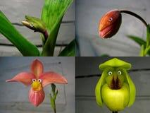 No 4 collage 'gente de la orquídea ' imagenes de archivo