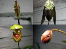No 2 collage 'gente de la orquídea ' fotos de archivo libres de regalías