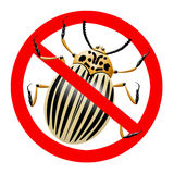 No colorado beetle Royalty Free Stock Images