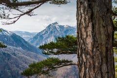 No coração da floresta úmida, o sentimento da liberdade fotos de stock royalty free
