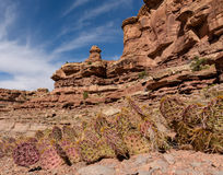 No Country for Old Men. Cactus growing in the red rock canyons near Moab, Utah royalty free stock photography