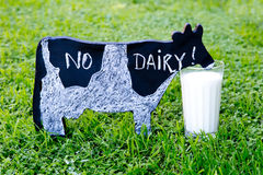 No Dairy handwritten in chalk on blackboard cow next to glass of. Milk on green grass Royalty Free Stock Photos