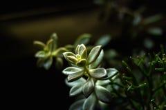 No deserto, as plantas suculentos mostram sua força fotografia de stock royalty free