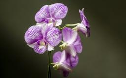 No destaque, os detalhes de uma orquídea bonita imagem de stock royalty free