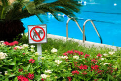 No dog allowed. A no dog allowed sign on the side of a pool Stock Image