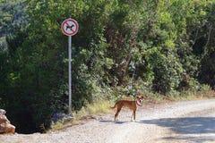 No dog sign Royalty Free Stock Photo
