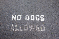 No Dogs Allowed Stencil on Path Royalty Free Stock Image