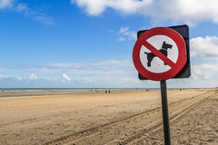 No dogs prohibitory restrictive sign on the beach. Belgium Royalty Free Stock Image