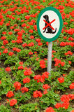 No dogs sign in flowerbed. Closeup of no dogs sign in colorful blooming red flowerbed royalty free stock photography
