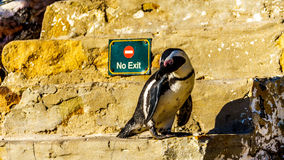 No Entry or Exit for Penguins? Stock Photography