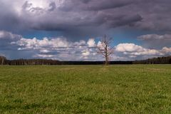 No escoja ningún árbol de la hoja en campo Nubes oscuras arriba Imagenes de archivo