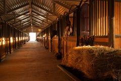 No estábulo com cavalos imagens de stock