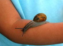 No Fear. Snail crawling on a childs arm Stock Photography