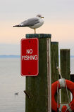 No Fishing. Seagull on the docks in Havre de Grace Md stock photos