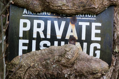 No fishing sign with tree growing around it. An old metal sign stating private fishing has been engulfed by the growth of the tree, still showing its message Royalty Free Stock Image