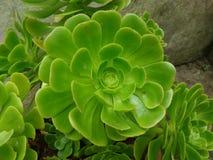 No flor sino una planta Imagenes de archivo