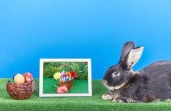 No fundo do azul um coelho encontra-se ao lado das imagens das flores e dos ovos da páscoa Imagem de Stock