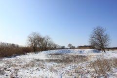 No fundo do céu azul as árvores nos juncos no inverno imagens de stock