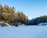 No gelo do lago da floresta Foto de Stock