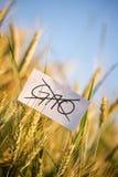 No GMO crops allowed concept Stock Photo