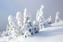 No gramado coberto com a neve Fotografia de Stock Royalty Free