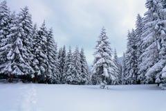 No gramado coberto com a neve que as árvores agradáveis estão estando derramou com os flocos de neve no dia de inverno gelado Foto de Stock